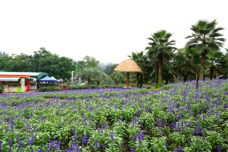 高生态效益的植物确保实现城市森林净化空气调节湿度涵养水源滞尘